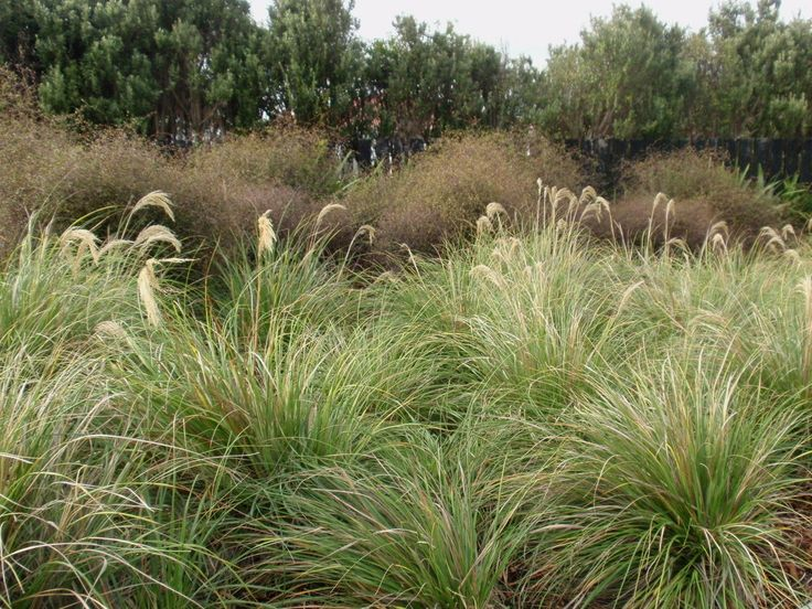 A really good web site about natives in landscape gardening…