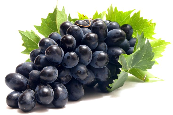 Wallpapers Fruit Grapes Food Image #315122 Download