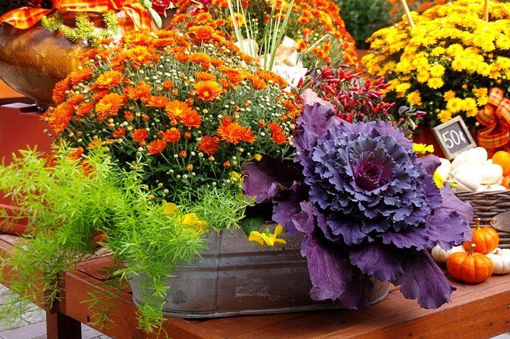 Pretty Fall container Garden