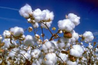 Why Can Organic Cotton Save Our Water