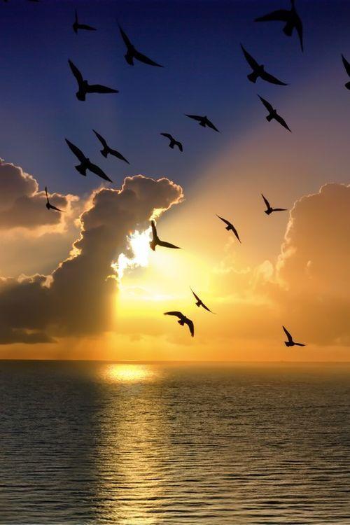"""thelordismylightandmysalvation: """" Seaside Sunrise """""""