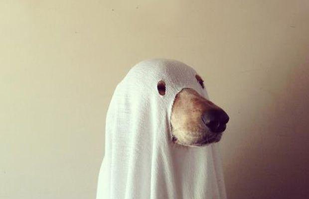 Deguisement Halloween pour chien : best of