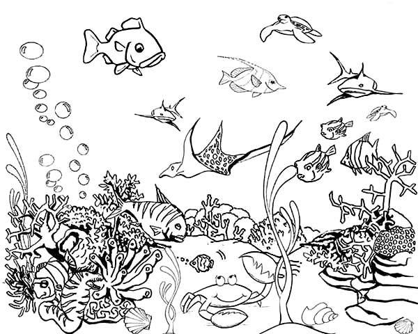 Fish Aquarium Coloring Pages Tropical Fish Tank Coloring Page Netart 600x480 Jpeg Fish Coloring Page Tropical Fish Tanks Coloring Pages