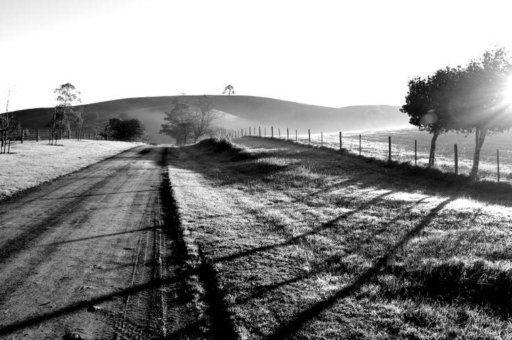 Misty Morning Photographer: Shelley Wilton