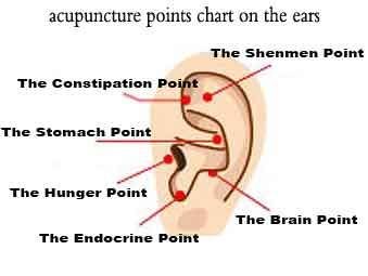 Ear acupressure points for weight loss.                                                                                                                                                     More