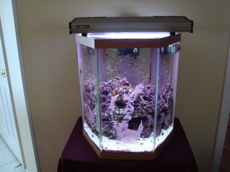 1000 ideas about aquarium hood on pinterest aquarium for 20 gallon hexagon fish tank