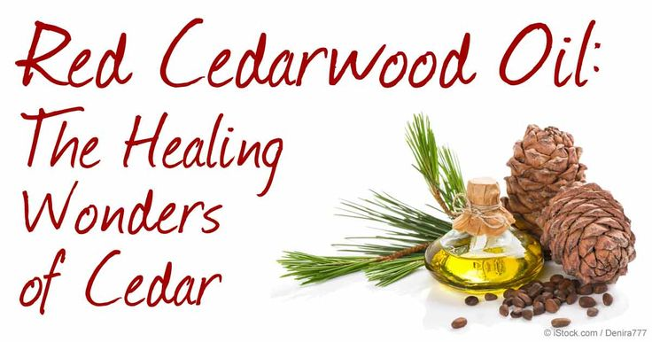 Be informed on what could make red cedarwood oil a valuable addition to your home – from its uses, benefits, and recommended applications. http://articles.mercola.com/herbal-oils/red-cedarwood-oil.aspx