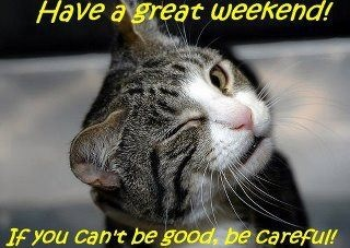 Image result for have a great cat weekend