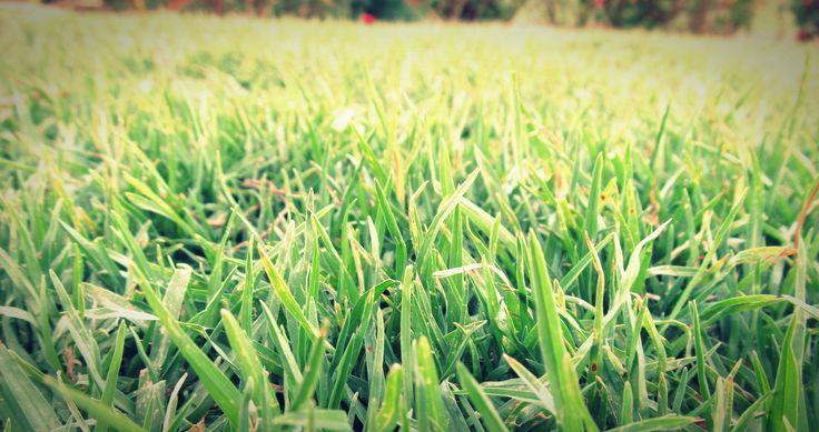 Día 19: Algo del suelo, algo de vida
