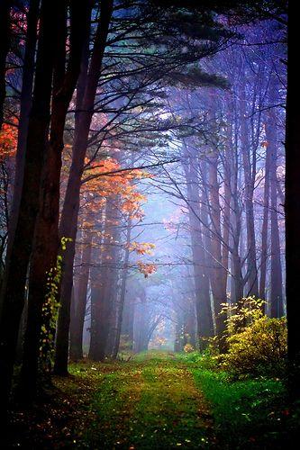 Woodlands | Flickr - Photo Sharing!