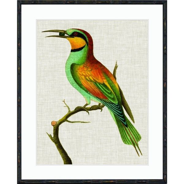 Imperial Bird Print 01 ($495) ❤ liked on Polyvore featuring home, home decor, wall art, art, orange wall art, tropical wall art, bird wall art, anchor wall art and bird home decor