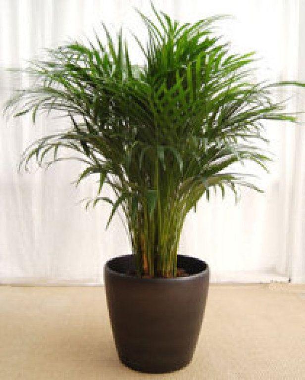Mejores 376 im genes de plantas y jardines en pinterest for Mejores plantas para interior