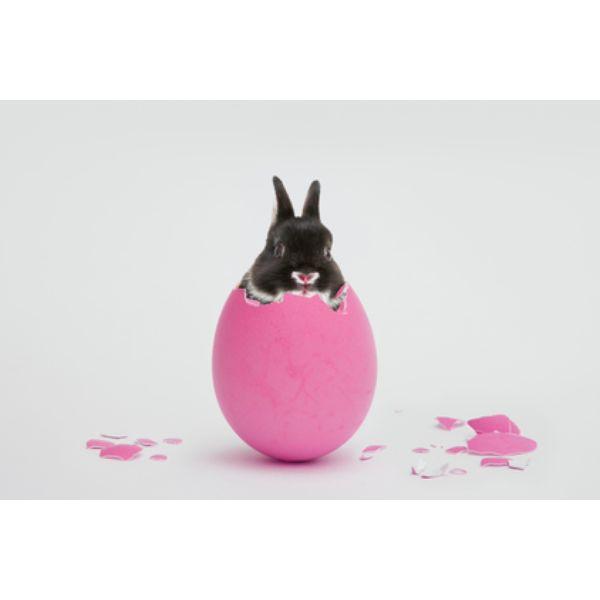 El significado de los huevos de Pascua | eHow en Español