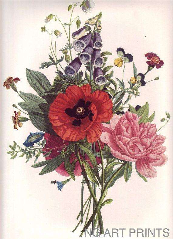 Vintage Flower Print, Large Rose Botanical Print, Oversized Botanical Wall Art, Redoute Style Print, Jean Louis Prevost Wall Hanging