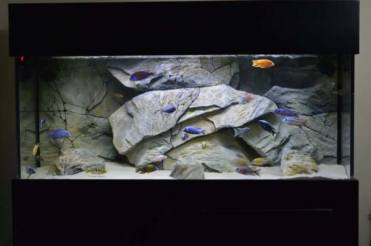 How To Acclimate African Cichlids To Your Aquarium | My Secret Revealed