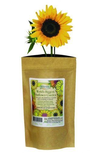 Worldu0027s Biggest Sunflower Blooms In A Bag Price : $9.95 Http://www.