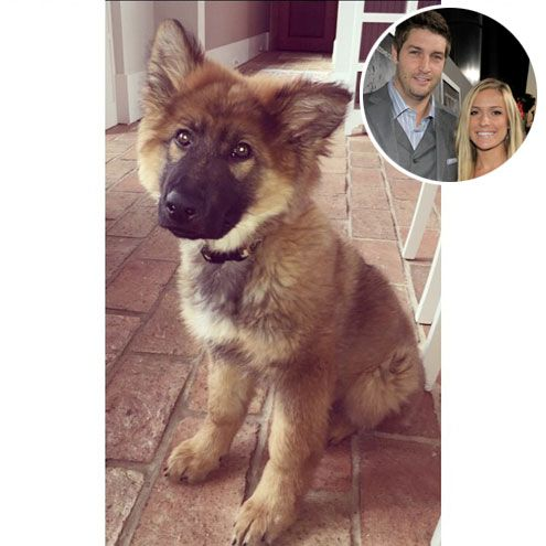 """Stars & Their Pets: Instagram Edition   KRISTIN CAVALLARI   """"Because 2 boys under the age of 3 weren't enough,"""" Cavallari jokes about her latest charge, a squeeze-able new puppy that she and husband Jay Cutler added to the family."""