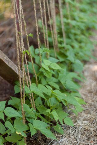 Vertical gardening for healthier vegetables & fruit | See more about Gardening,
