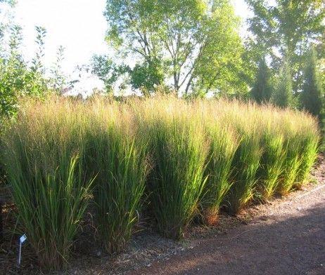 142 best images about grassen on pinterest gardens for Brown ornamental grass plants