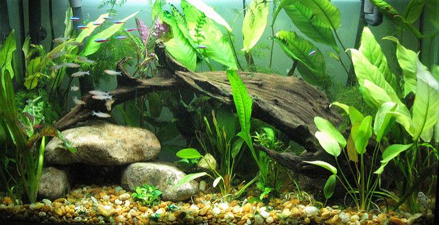 Home Home Aquarium Youaqua Aquarium Lovefish Aquariumproducts Tropicalfishstore Tropical Fish Store Home Aquarium Aquarium