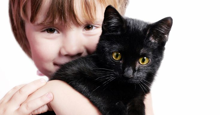 A black cat crossing your path signifies that the animal is going somewhere. Celebrate #blackcatappreciationday !!
