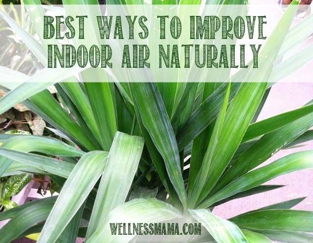 Did you know you can filter indoor air with plants? This natural and inexpensive method has a variety of health benefits.