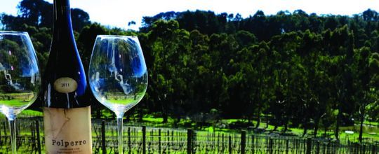 There are over 50 wineries here on the peninsula all  a short drive from Harmony Bed & Breakfast