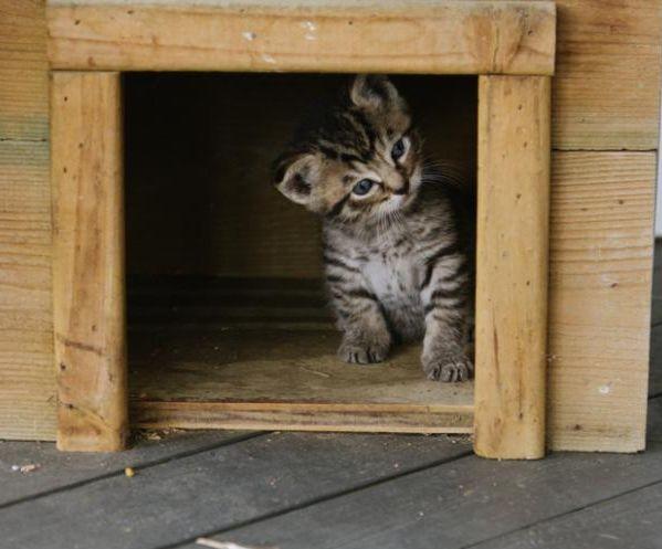 Tuto : comment faire une maison pour chat soi-même ?