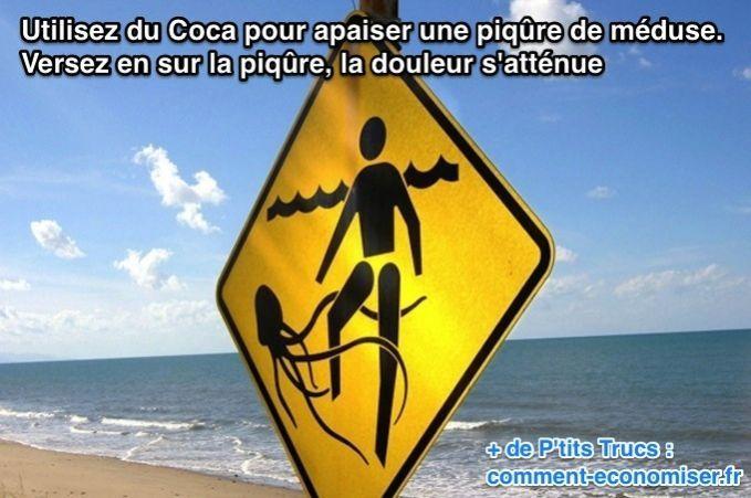 le coca attenue la douleur des piqures de méduse