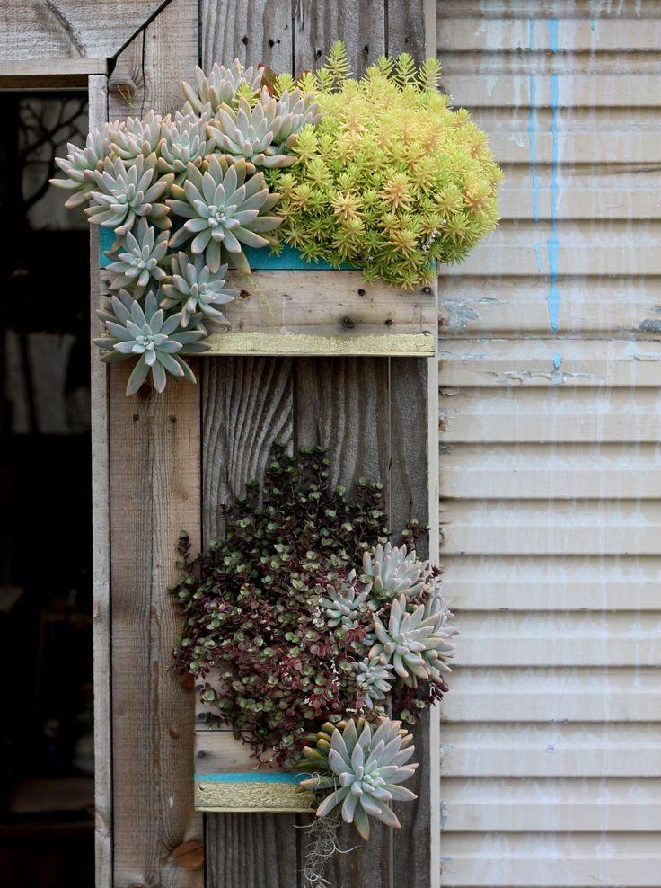 1000+ Images About *Beautiful Succulents & Cactus On Pinterest