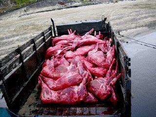 Оленина. Продажа мяса дикого северного оленя ДСО. Купить полярную оленину в Свердловской области. Польза и вред оленьего мяса. Полуфабрикаты из оленины напрямую из тундры. http://dich.ws/