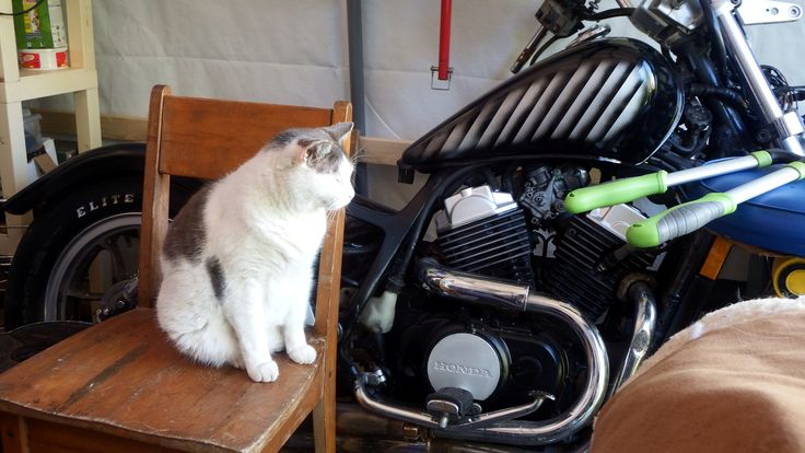 My helper Hershel and an 84 VT500 project yet to be finished.