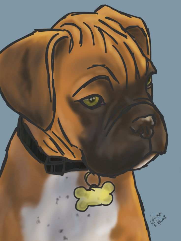 Boxer; drawing by ArtWolf