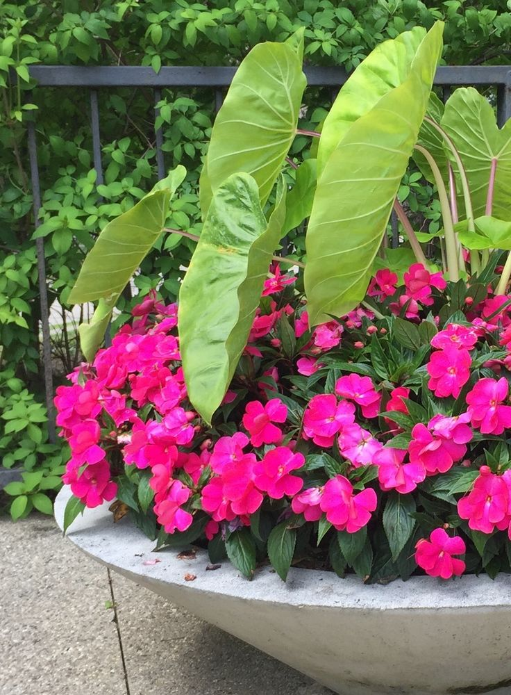 Waiting to plant seasonal containers until the soil and night temperatures warm up in our zone is an idea of considerable merit. For those of you that read this journal regularly, you already know …