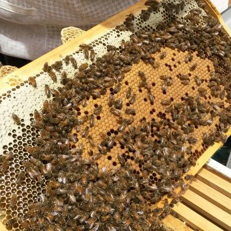 Missing bees in Winter