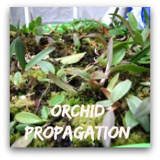 Growing Orchids For Beginners - 8 Tips and Care Instructions including orchid types that are suitable for beginners.