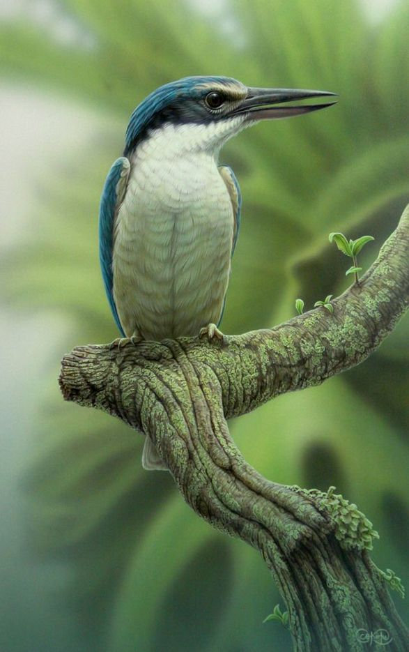 Sacred Kingfisher painting by Christopher Pope.