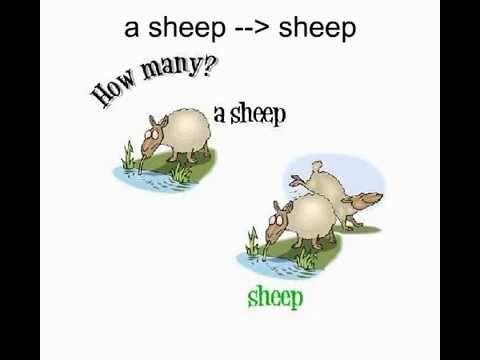Plural Nouns Irregular Forms - learn the noun forms