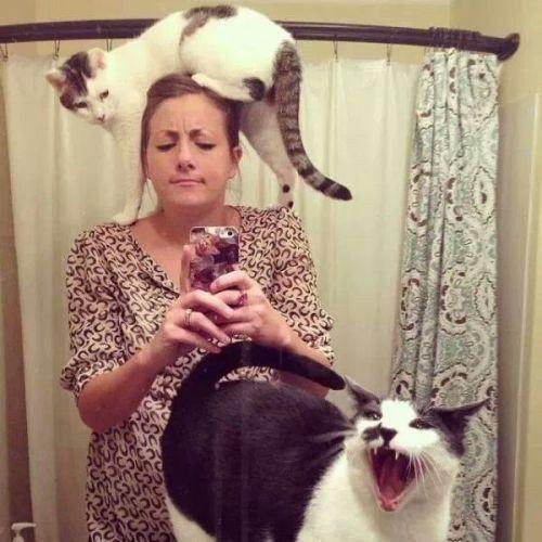 """<p>Selfie mit Katzenbande: Die Dame hat sich ja anscheinend zwei ganz besondere Exemplare an Land gezogen. Die eine tanzt ihr auf dem Kopf herum, die andere lacht laut in die Kamera. (Bild: <a rel=""""nofollow"""" href=""""http://www.thisisphotobomb.com"""">www.thisisphotobomb.com</a>)</p>"""