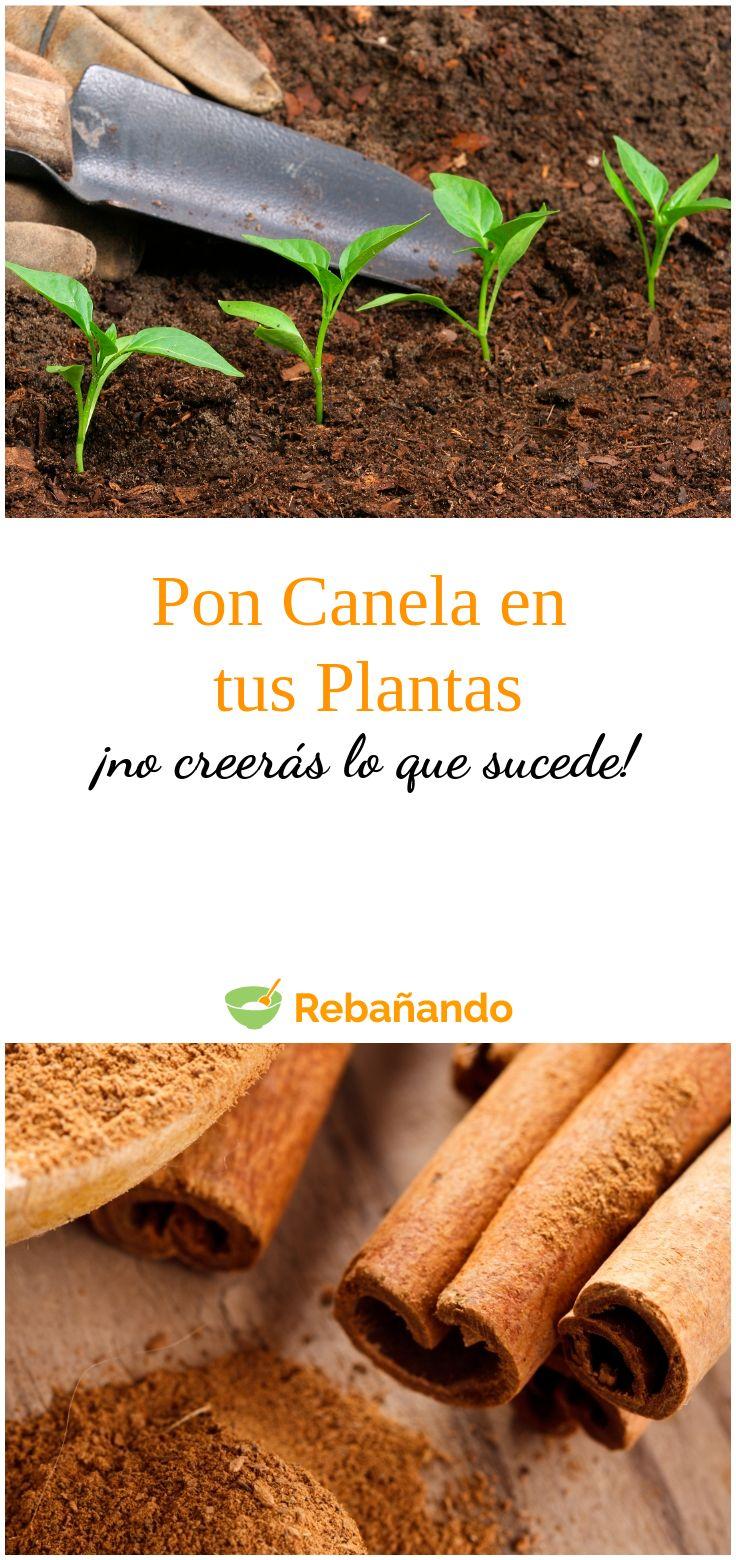 Pon un poco de canela en tus plantas...¡no creerás lo que sucede! Plantar, Celery, Carrots, Vegetables, Gardening, Children, Outdoor, Garden, Tips