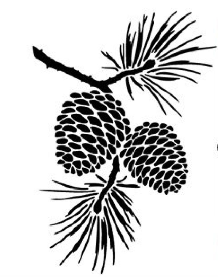 веточка кедра рисунок