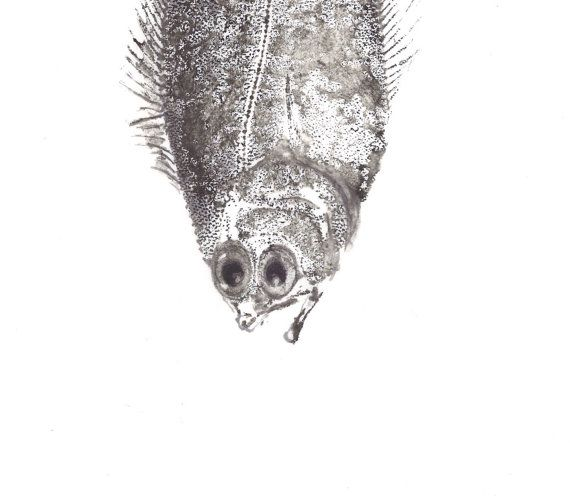 gyotaku fish print original washi paper by maritmoss on Etsy