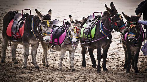 Donkey rides at Blackpool