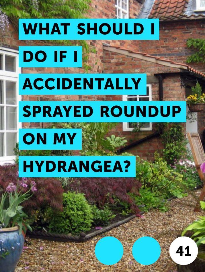 Accidentally Sprayed Roundup