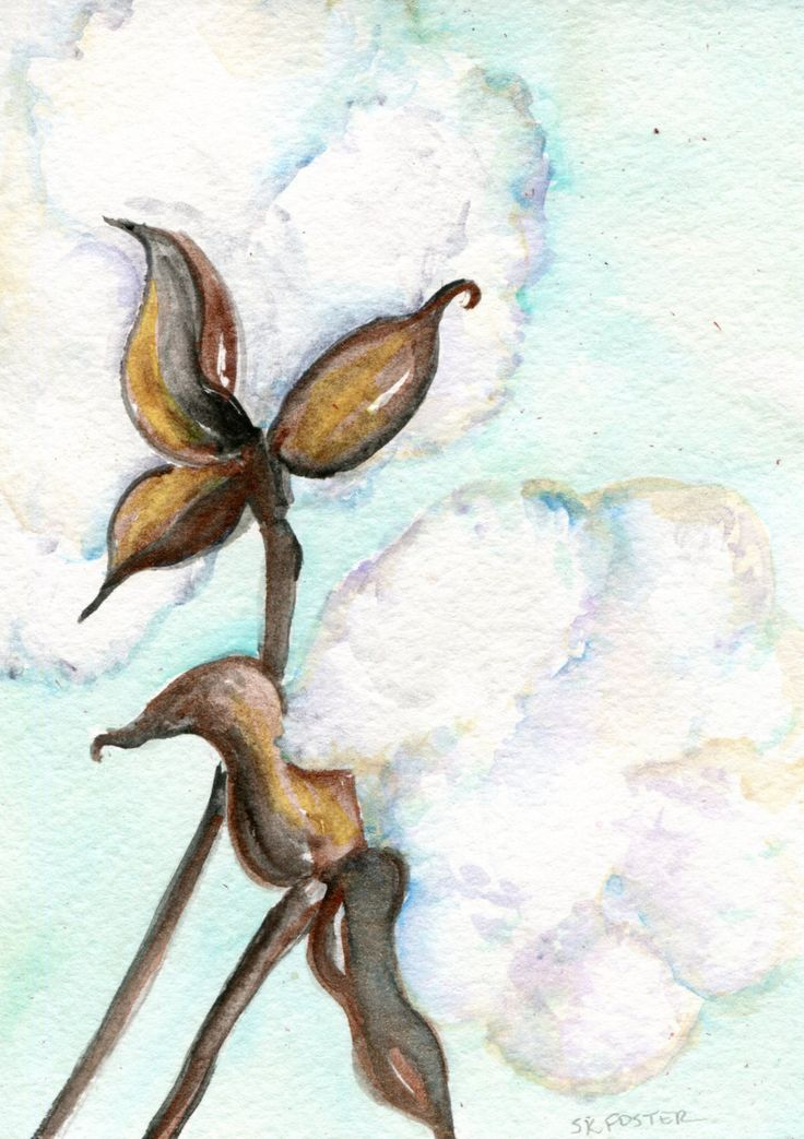 Cotton Bolls watercolors paintings original, Cotton Painting, Small Botanical Wall Art, 5 x 7 - original watercolor painting of cotton boll by SharonFosterArt on Etsy