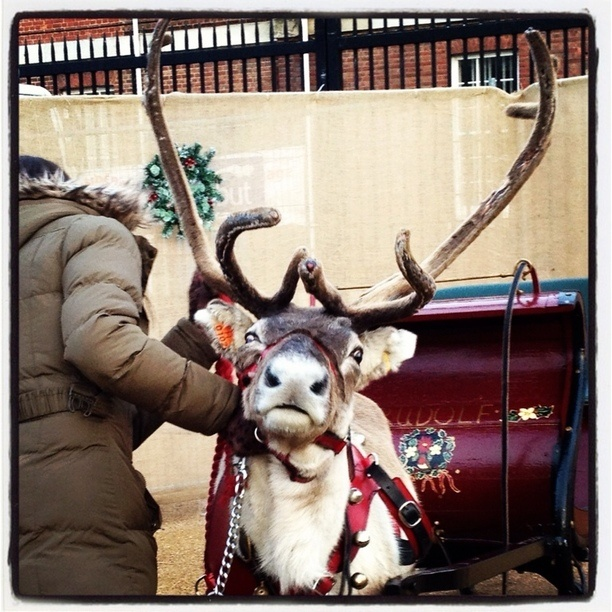 "Discovered by Ginny Downey: ""Rudolph"" at H M Naval Base in Portsmouth, United Kingdom"