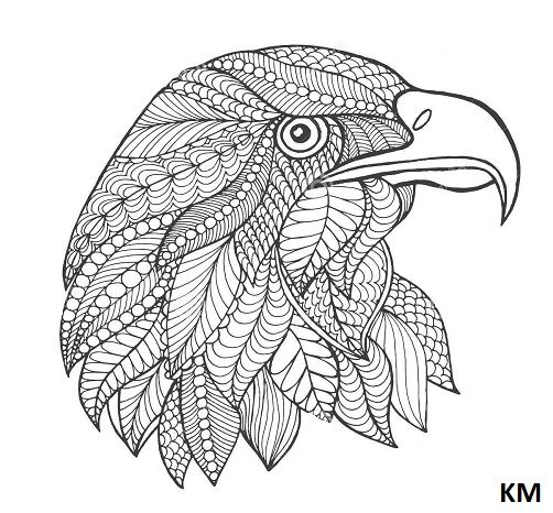 ausmalbilder falke  vogel malvorlagen adler zeichnung