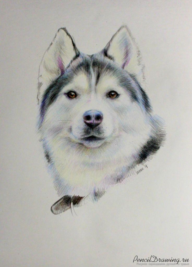 хаски | PencilDrawing.ru - Красивые рисунки карандашом, ручкой и тушью
