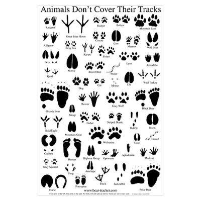 Comprehensive image for animal tracks printable