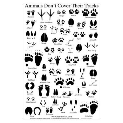Smart image in animal tracks printable